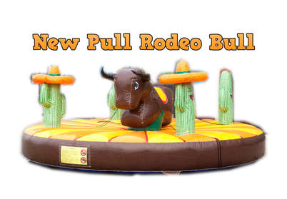 Rodeo Bull for hire in Hereford